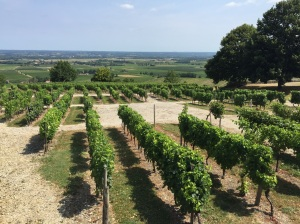 View of the Monbazillac Vineyards from the Château